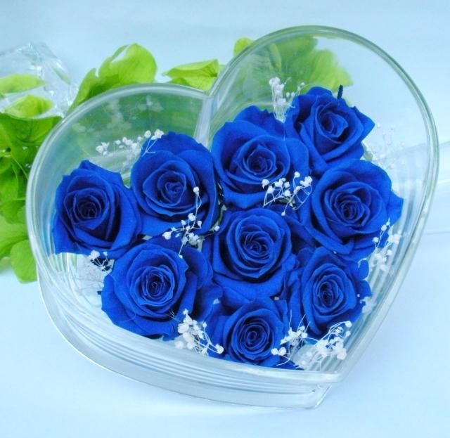 Hoa hồng xanh dương Hoa-ho10