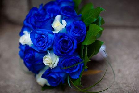 Hoa hồng xanh dương Hoa-ho13