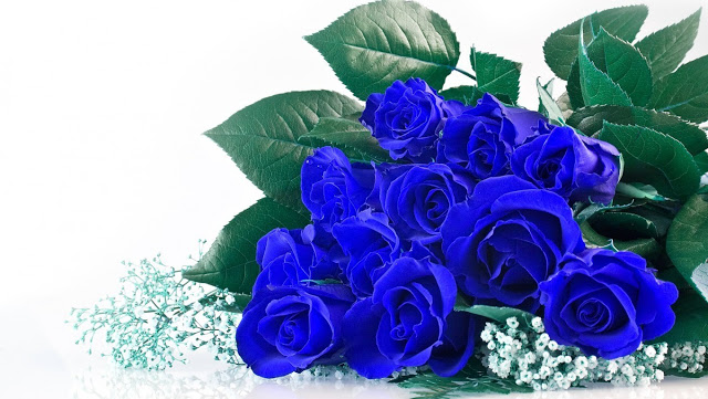 Hoa hồng xanh dương Hoa-ho18