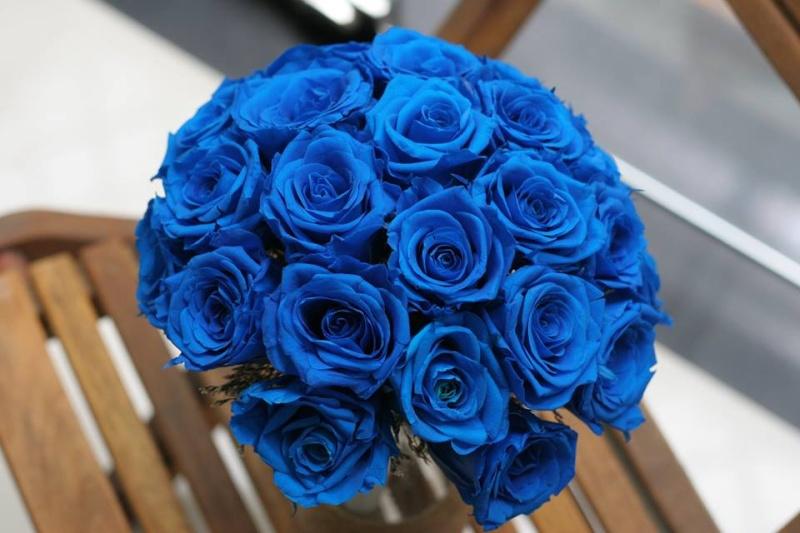 Hoa hồng xanh dương Hoa-ho21