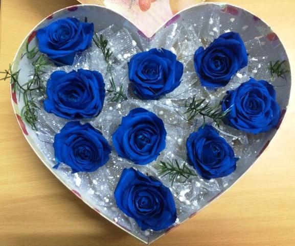 Hoa hồng xanh dương Hoa-ho22