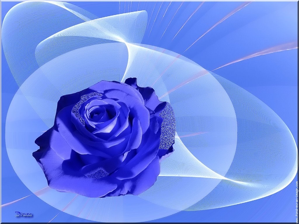Hoa hồng xanh dương - Page 2 Hwc97x11
