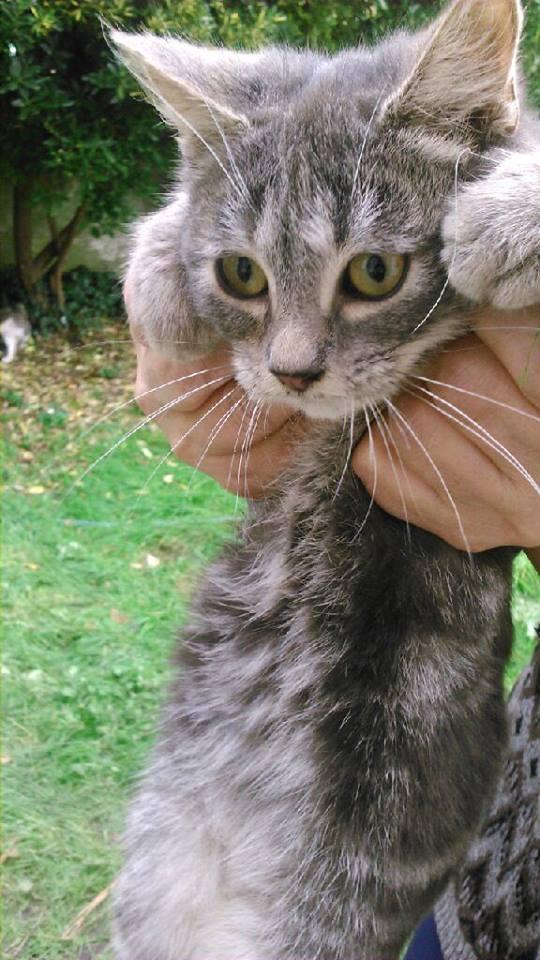 SOS pour 7 chats dont 2 chatons siam dans le 62 12118710