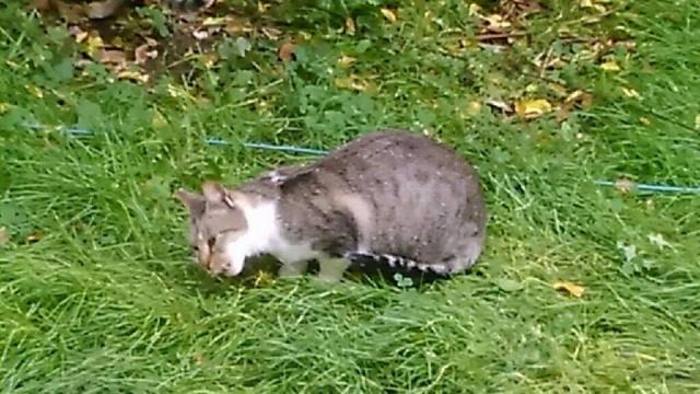SOS pour 7 chats dont 2 chatons siam dans le 62 12188911