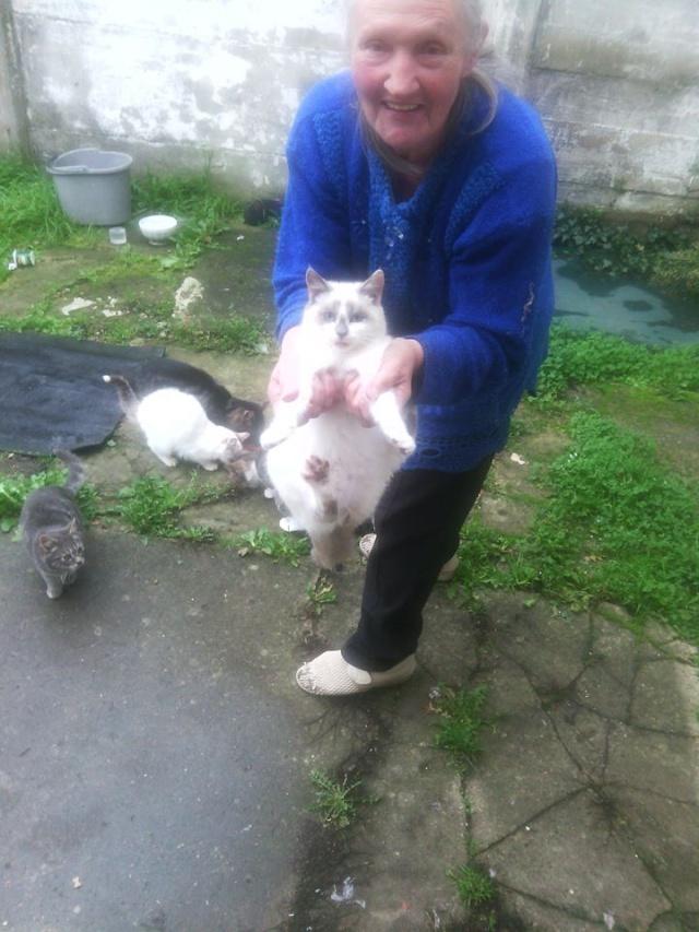 SOS pour 7 chats dont 2 chatons siam dans le 62 12189710