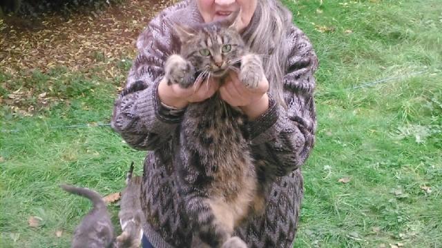 SOS pour 7 chats dont 2 chatons siam dans le 62 12189810