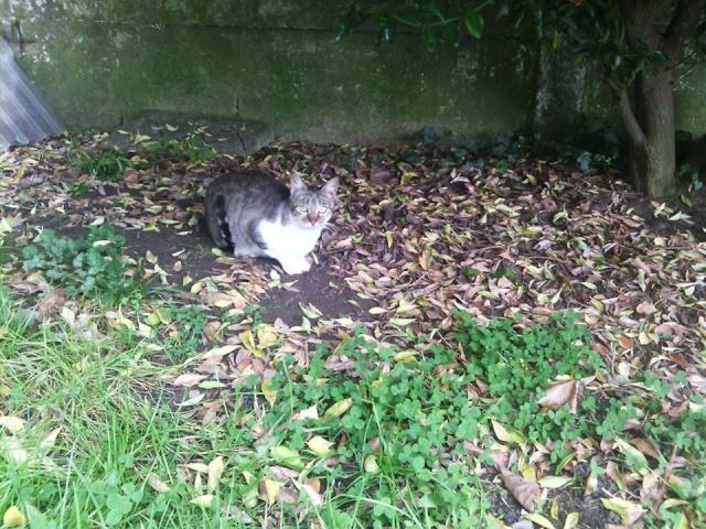 SOS pour 7 chats dont 2 chatons siam dans le 62 12191410