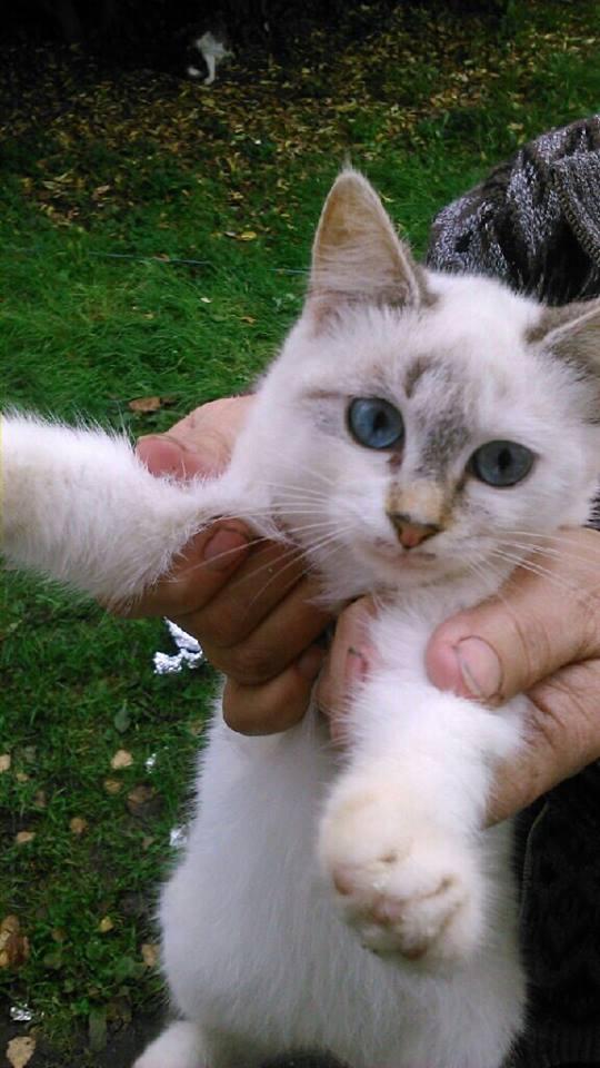 SOS pour 7 chats dont 2 chatons siam dans le 62 12193610