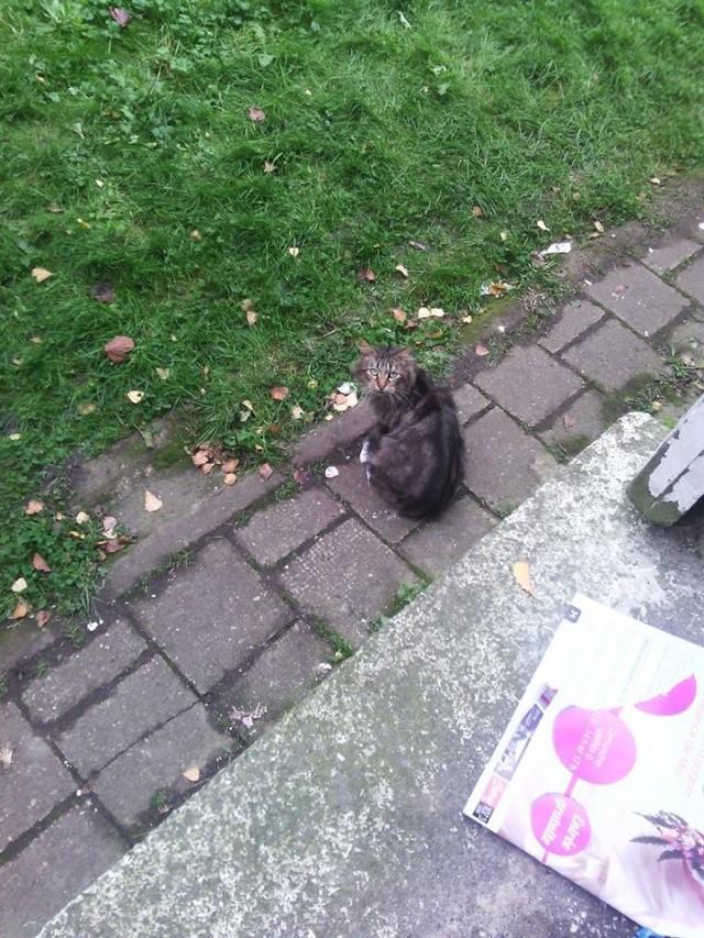 SOS pour 7 chats dont 2 chatons siam dans le 62 12193713