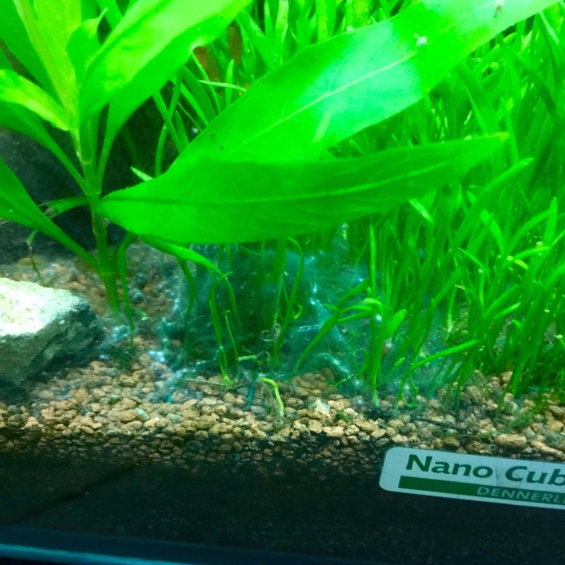 Ce sont des algues?  Image36
