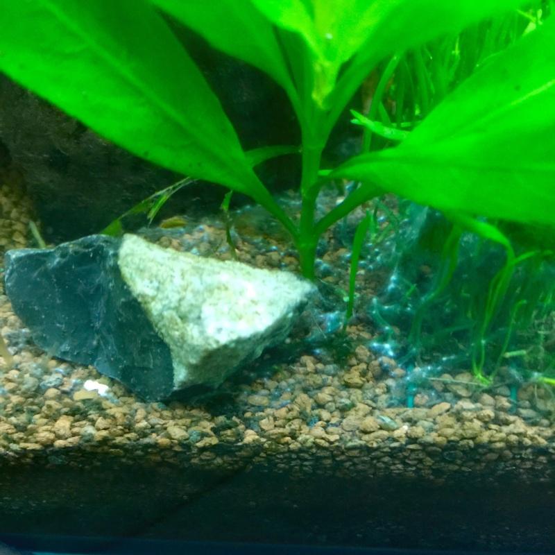 Ce sont des algues?  Image37