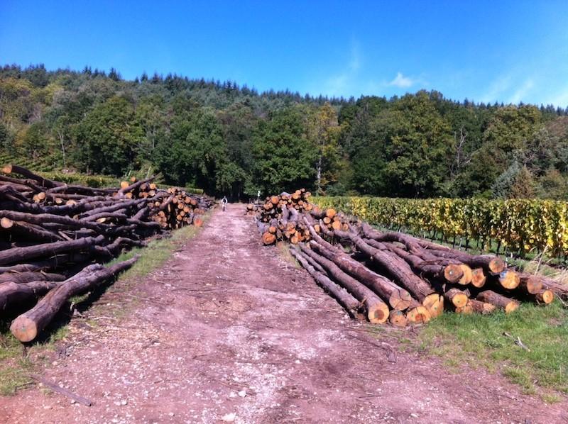 Les circuits du vin nouveau à Wuenheim de 04 octobre Photo_12