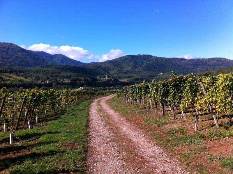 Les circuits du vin nouveau à Wuenheim de 04 octobre Photo_15