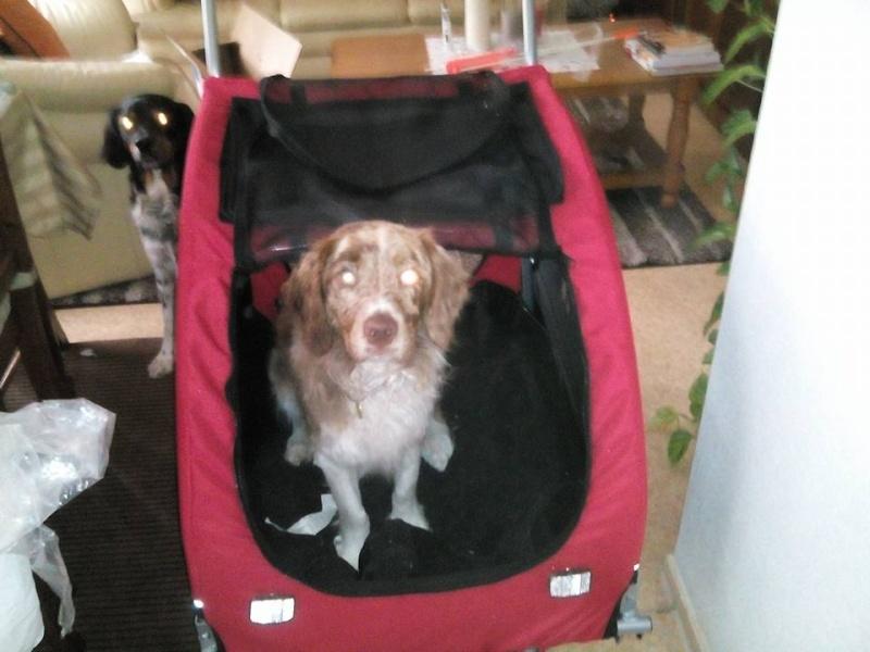 Modes de transport pour petits / vieux chiens qui fatiguent vite - Page 4 11038610