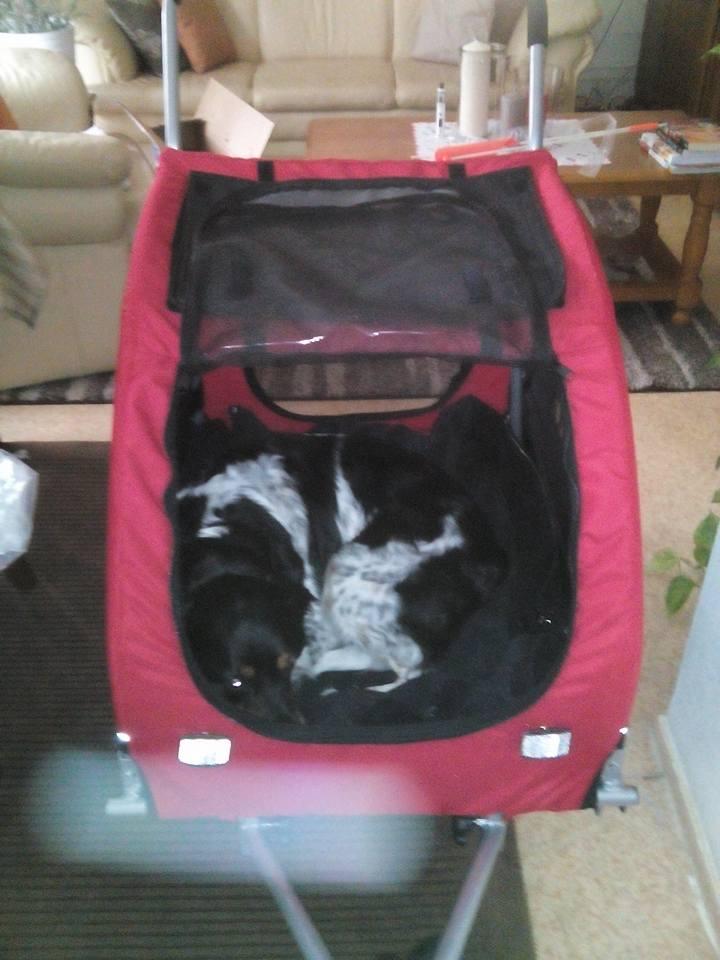 Modes de transport pour petits / vieux chiens qui fatiguent vite - Page 4 Caross10