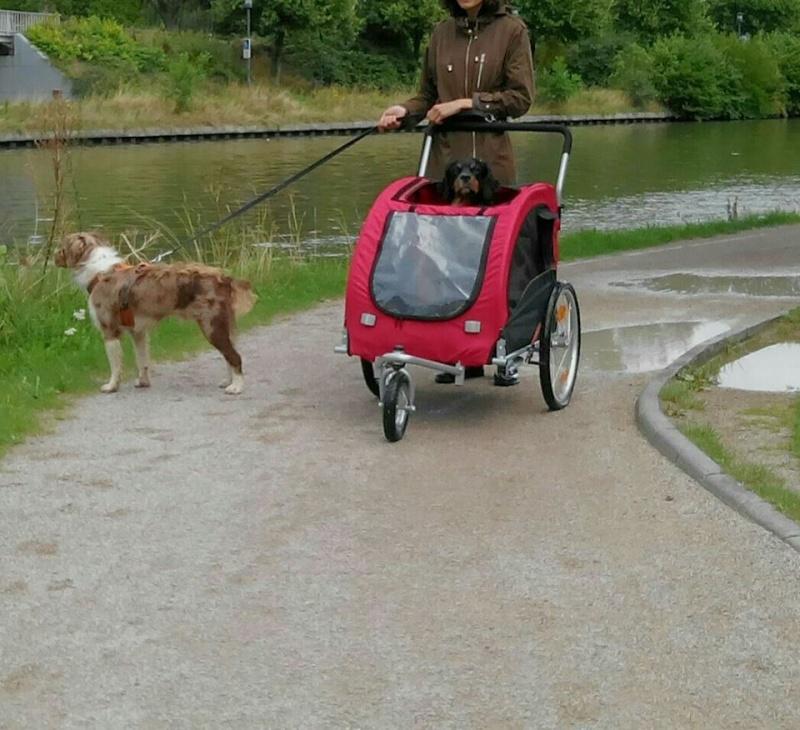 Modes de transport pour petits / vieux chiens qui fatiguent vite - Page 4 Carros10
