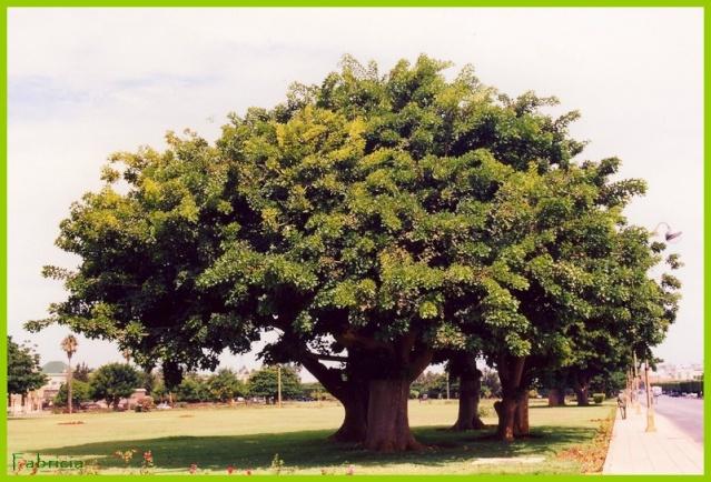 Photos de jardins, parcs, forêts... dans le monde Arbre_11