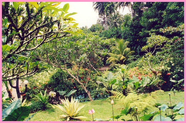Photos de jardins, parcs, forêts... dans le monde Jardin10