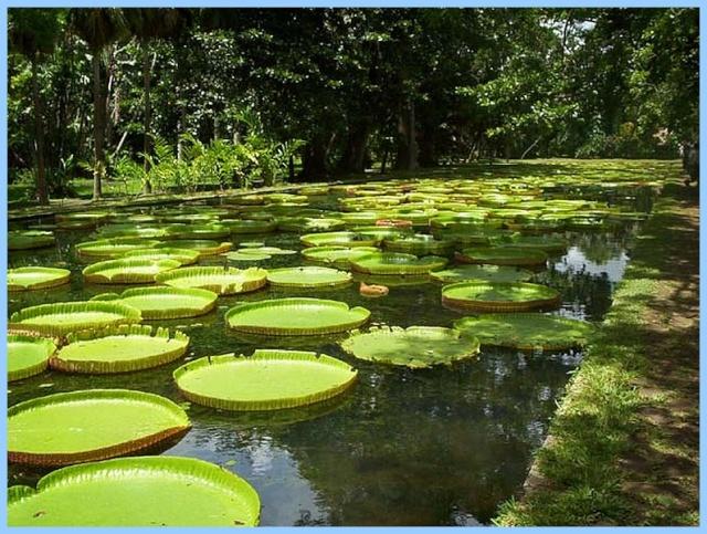 Photos de jardins, parcs, forêts... dans le monde Jardin11