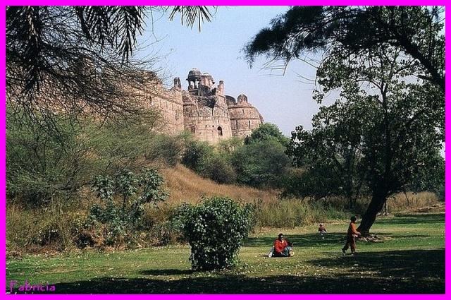 Photos de jardins, parcs, forêts... dans le monde Purana10