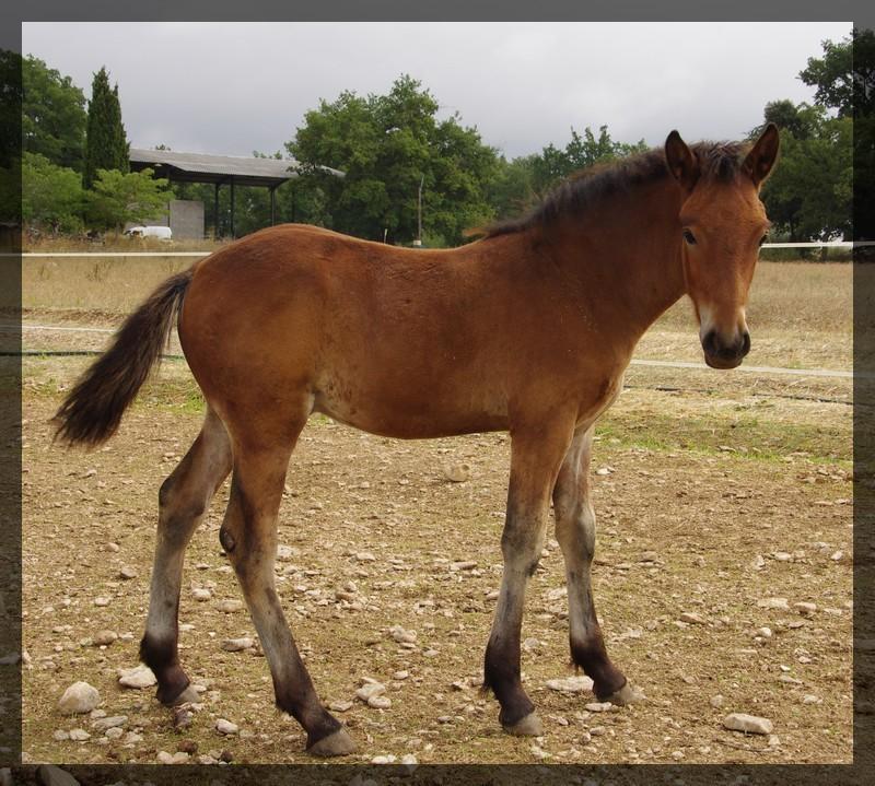 Arizona des Anges du Ventoux né le 11 juin 2010 Imgp2618