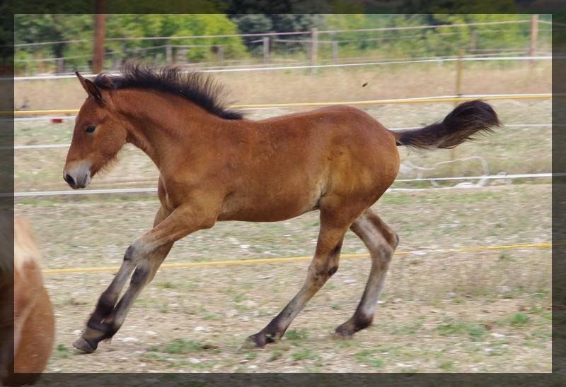Arizona des Anges du Ventoux né le 11 juin 2010 Imgp2623