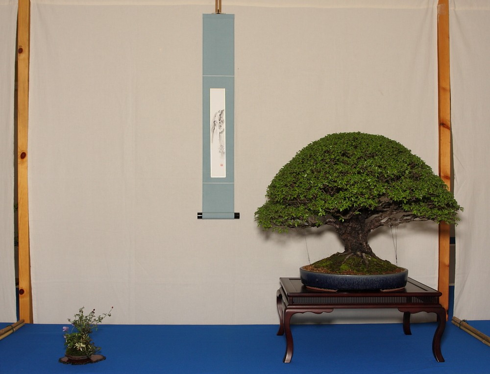 Two of Ritta's Shitakusa at the Best of British Bonsai 2011 show Our_cb10