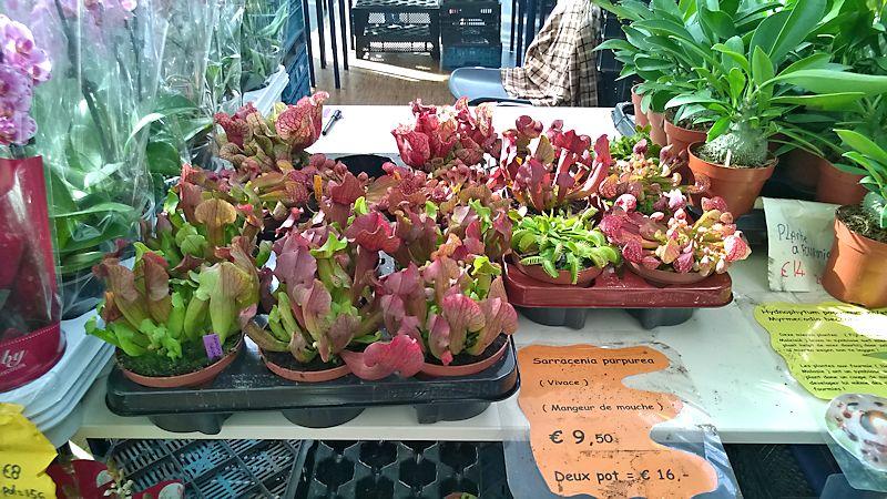 Expo-vente Gardenia à Beauvais (Oise, France) 10 et 11 Octobre 2015 Garden14