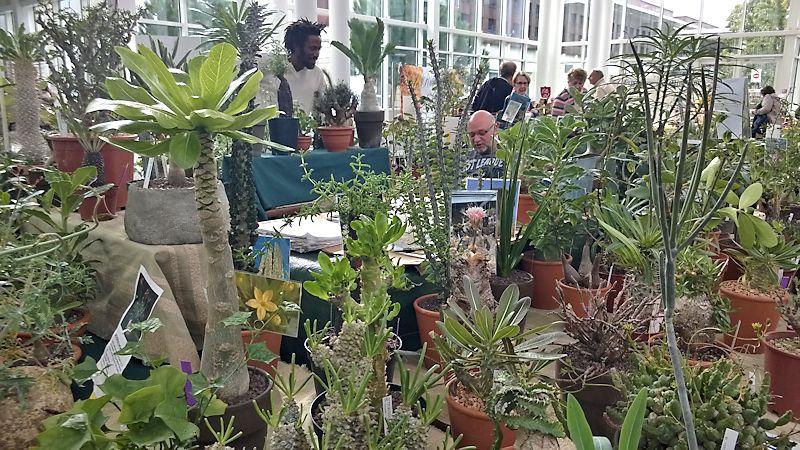 Expo-vente Gardenia à Beauvais (Oise, France) 10 et 11 Octobre 2015 Garden16