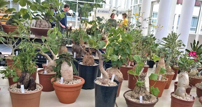 Expo-vente Gardenia à Beauvais (Oise, France) 10 et 11 Octobre 2015 Garden24