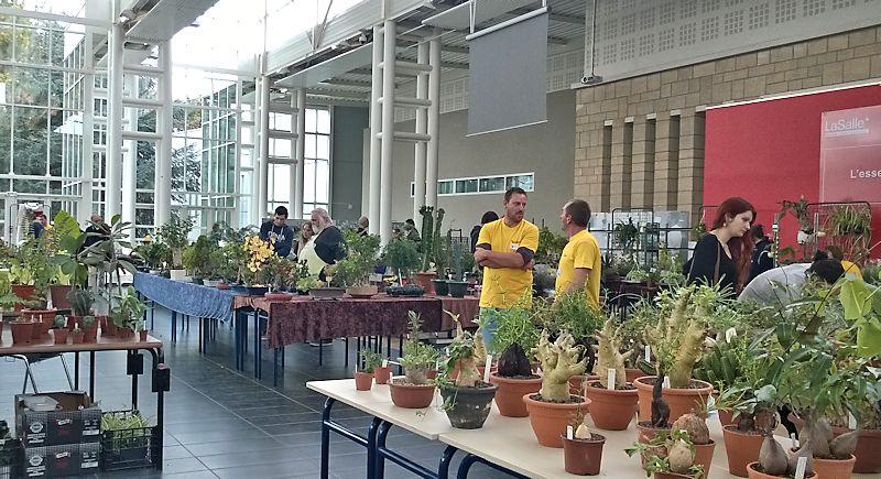 Expo-vente Gardenia à Beauvais (Oise, France) 10 et 11 Octobre 2015 Garden27