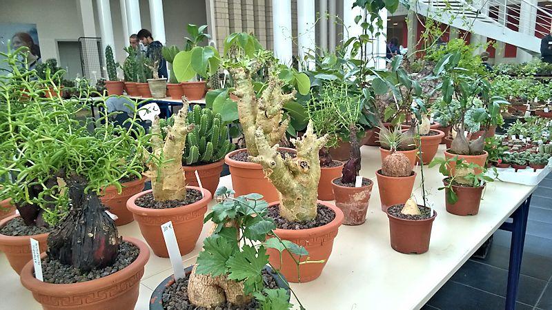 Expo-vente Gardenia à Beauvais (Oise, France) 10 et 11 Octobre 2015 Garden30