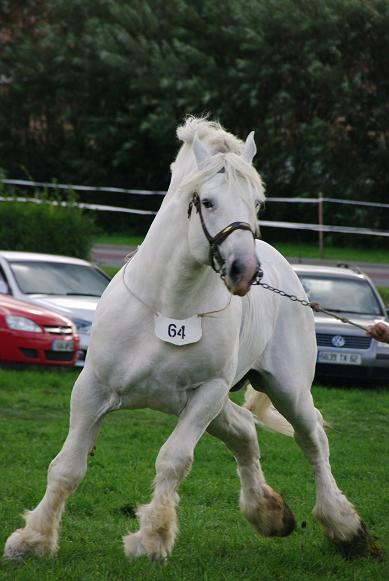 Champion 2011 des étalons Boulonnais Imgp5811