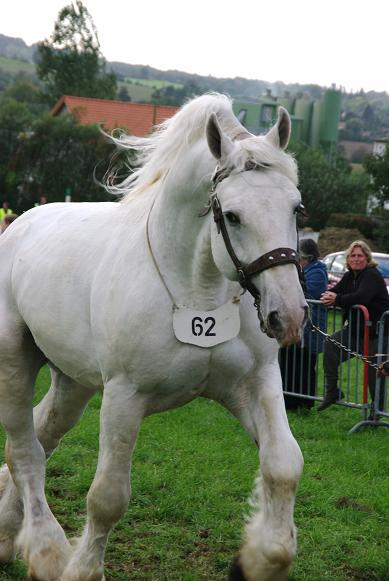 Champion 2011 des étalons Boulonnais Imgp5816
