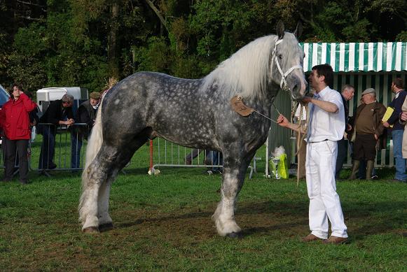 Champion 2011 des étalons Boulonnais Imgp5910