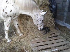 CONCOURS : Le cheval et les autres animaux  Dako_c12