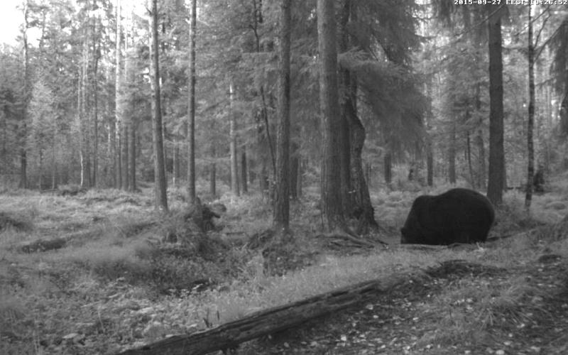 Alataguse Bear Cam 2013 - Page 8 Vlcsna30