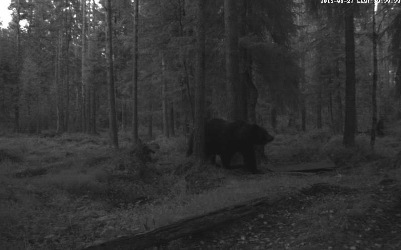 Alataguse Bear Cam 2013 - Page 8 Vlcsna32