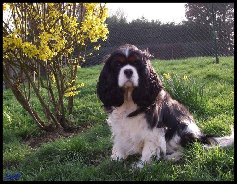 [Clos]Visite post adoption (chien) à Plogastel Saint-Germain pour Bayna 11931610