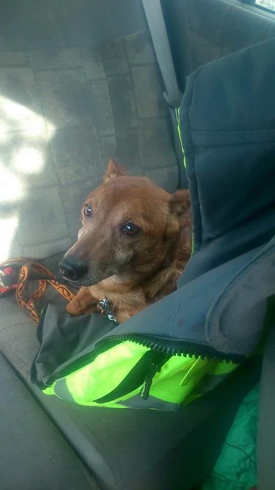 URGENT pour un petit chien de 13 ans (parrain / marraine pour prise en charge) Receiv11