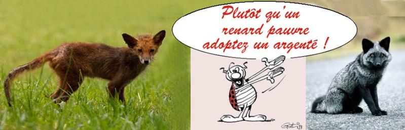 BURRITO, l'anniversaire d'un drôle d'animal !  Renard11