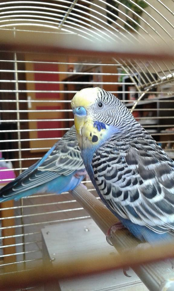 Mâle, femelle ? Oiseau14