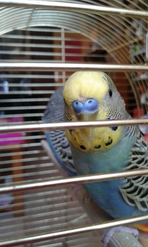 Mâle, femelle ? Oiseau15