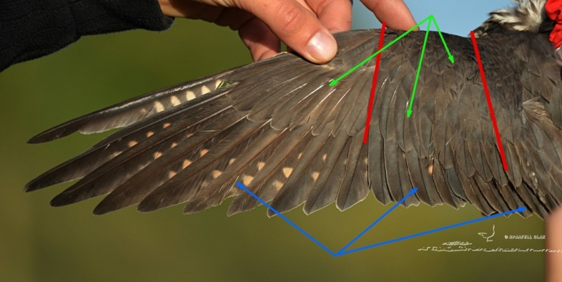 ID rapace mort Cotkl310