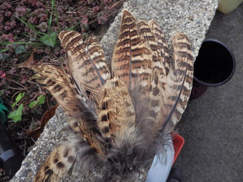 Identification plumes Imgp2410