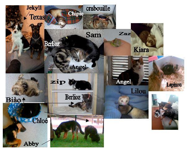 Allez venez nous les présenter ... - Page 3 Animal10