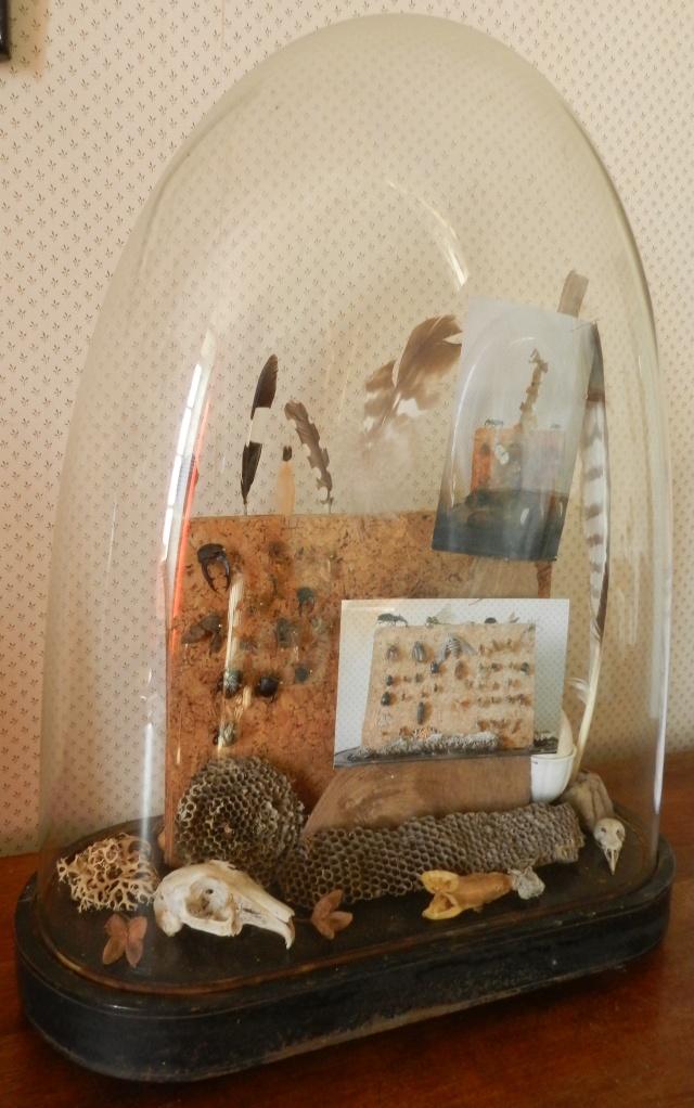 mon cabinet de curiosité ardèchois Marcla22