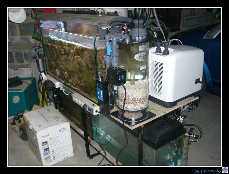 Présentation du bac de 450 litres d'un chti (paprikas) Essai_23