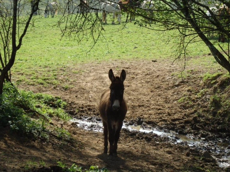 BALUCHON - âne né en 2011 - Gardé par son propriétaire Baluch11