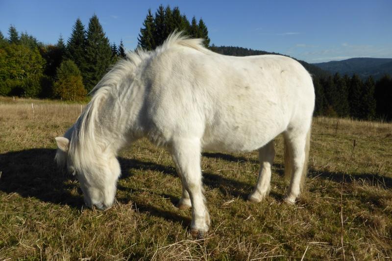 PRISCA - ONC poney typée Shetland née en 1990 - adoptée en septembre 2010 par Delphine - Page 3 P1020515
